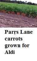 parrslanecarrots
