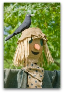 scarecrow-with-blackbird